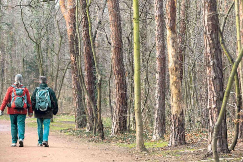 Mehr als 300 Bäume müssen im Blasewitzer Waldpark gefällt werden. Teile des Parks werden dafür ab Januar gesperrt.