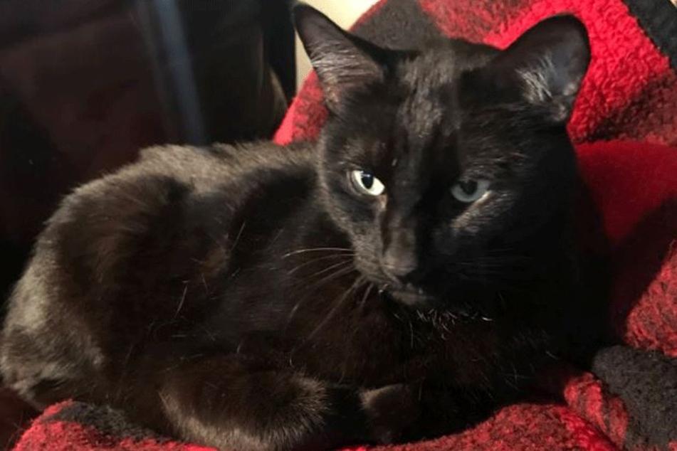 Panther wie er leibt und lebt.