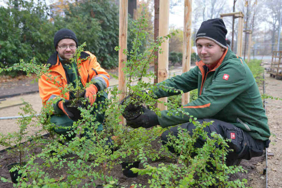 Neue Bäume und Sträucher: Eingang zum Küchwald soll schöner werden