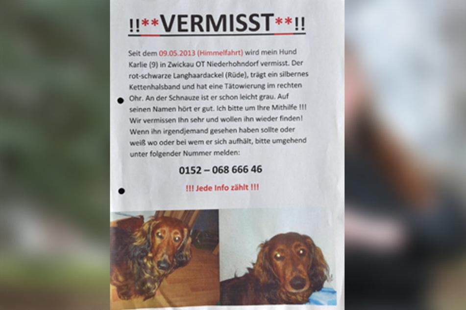 Seit vier Jahren sucht Julia Drechsel nach ihrem Karli.