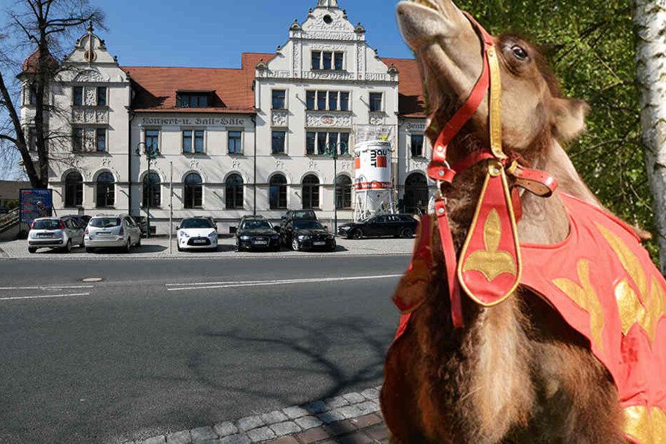 Aus Zirkus ausgebrochen! Kamele machen Weinböhla unsicher