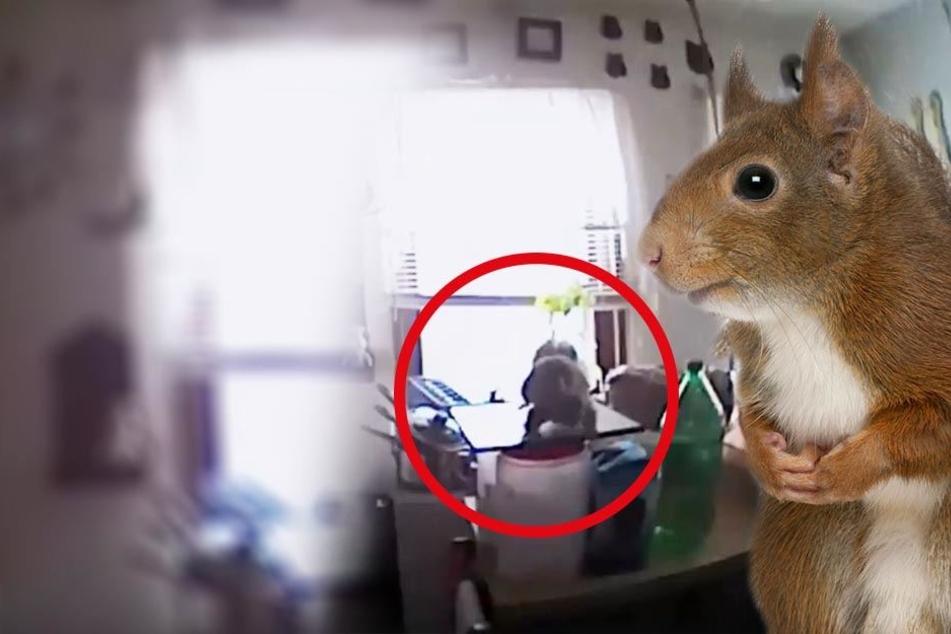 Tierischer Einbrecher attackiert Polizisten! Was war passiert?