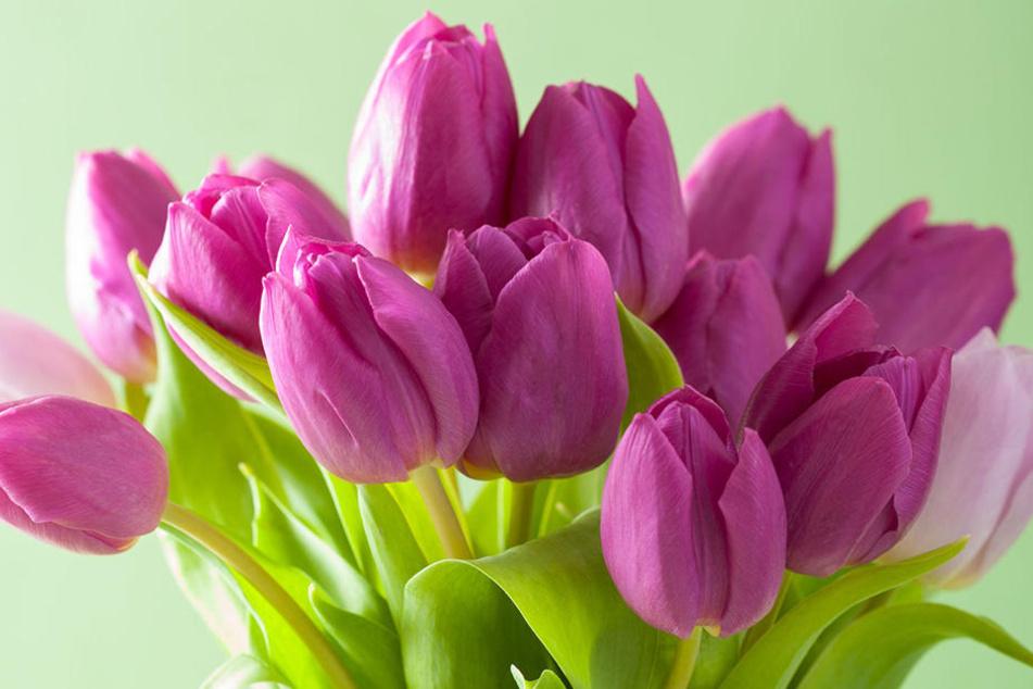 So ein Strauß sieht schön aus, kann aber gefährliche Pestizide enthalten. Am meisten belastet sind Rosen.