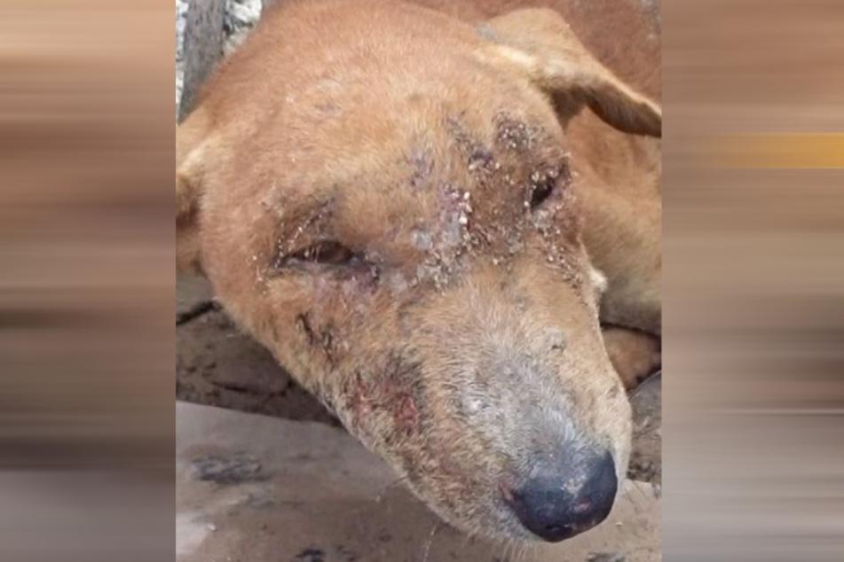 Diese Hunde-Dame schien dem Tod nahe, als man sie fand.