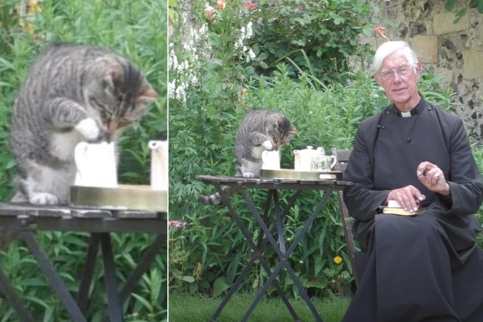 Video geht viral: Katze beklaut betenden Priester