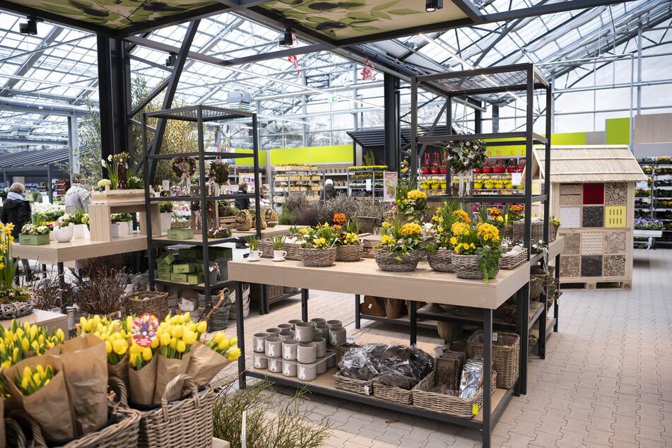 In diesem Gartencenter bei Hamburg gibt's für kurte Zeit mega Schnäppchen
