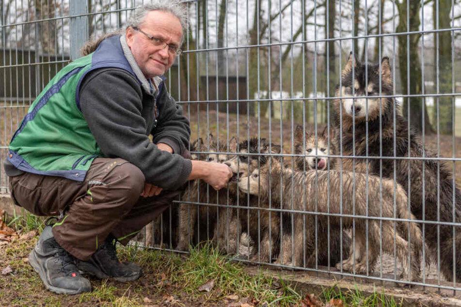 Tierheim-Chef Jens von Lienen (61) mit den abgegebenen Huskys. Manche von ihnen sind erst zwölf Wochen alt.