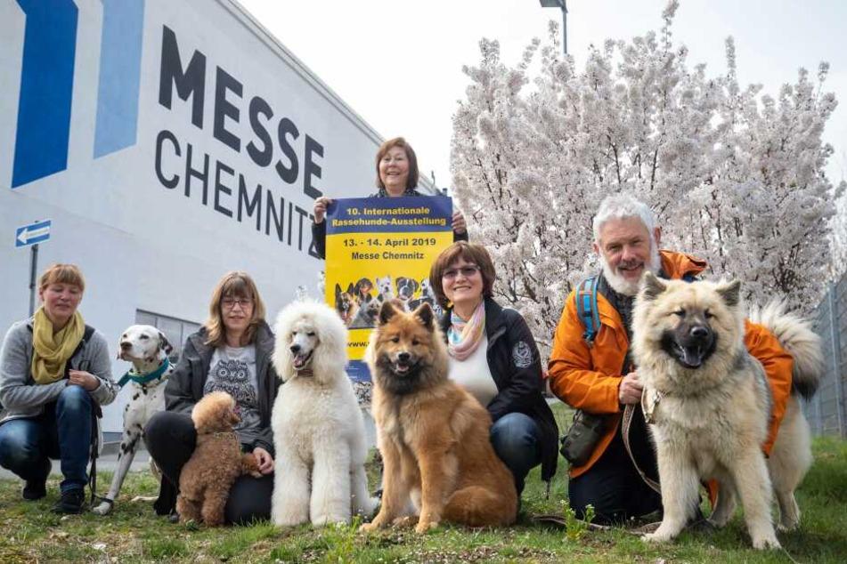 Rasse hat Klasse, aber auch der schönste Mischlingshund aus Chemnitz wird gesucht.