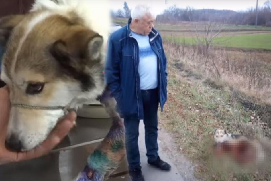 Herrchen will seinen Hund totschleifen