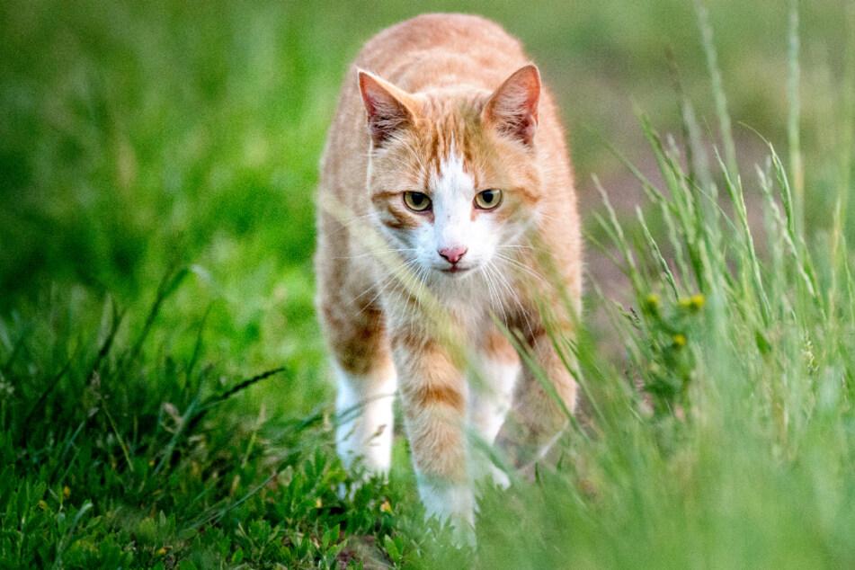 Schrecklich! Katze werden Vorderpfoten abgeschnitten