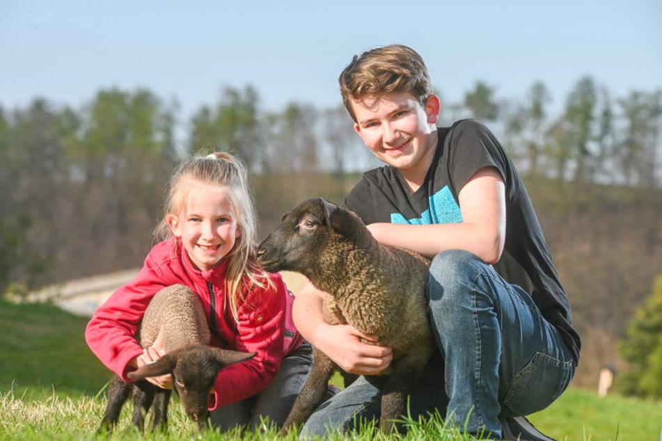 Klara Marie (8) und Julius (13) haben ihre Suffolk-Lämmchen gern - aber nicht zum Fressen!