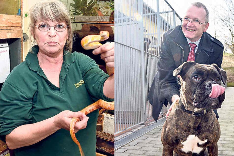 Tierpflegerin Iris Rothe (58) zeigt eine Kornnatter.     Ordnungsbürgermeister Detlef Sittel (50, CDU) besuchte gestern das Dresdner  Tierheim. Boxerhündin Cora (5) freute  sich.