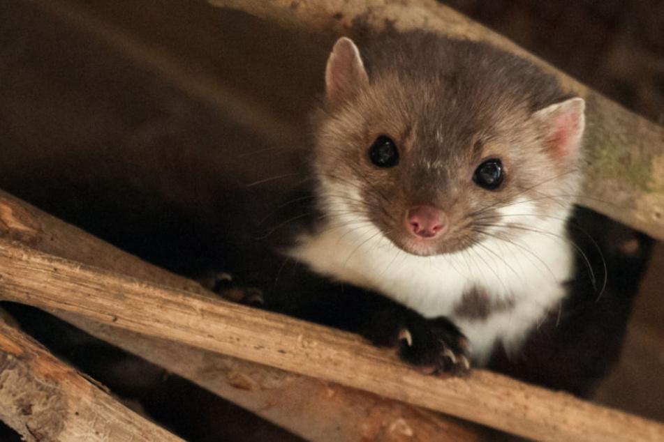 Unter den schlimmsten Bedingungen werden die Tiere gehalten (Symbolfoto).
