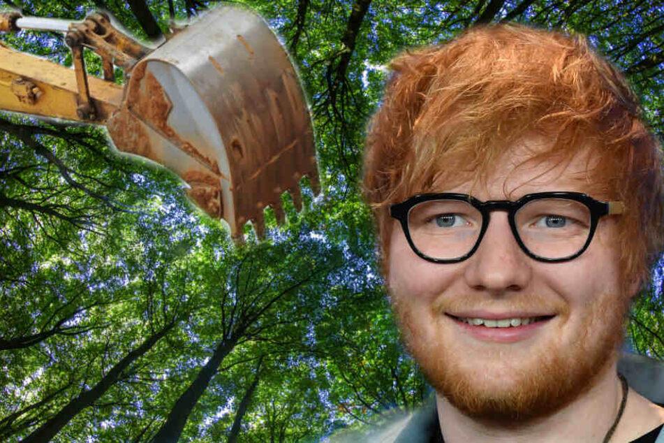 Für Ed Sheeran werden 60 Bäume umgesetzt. (Symbolbild)