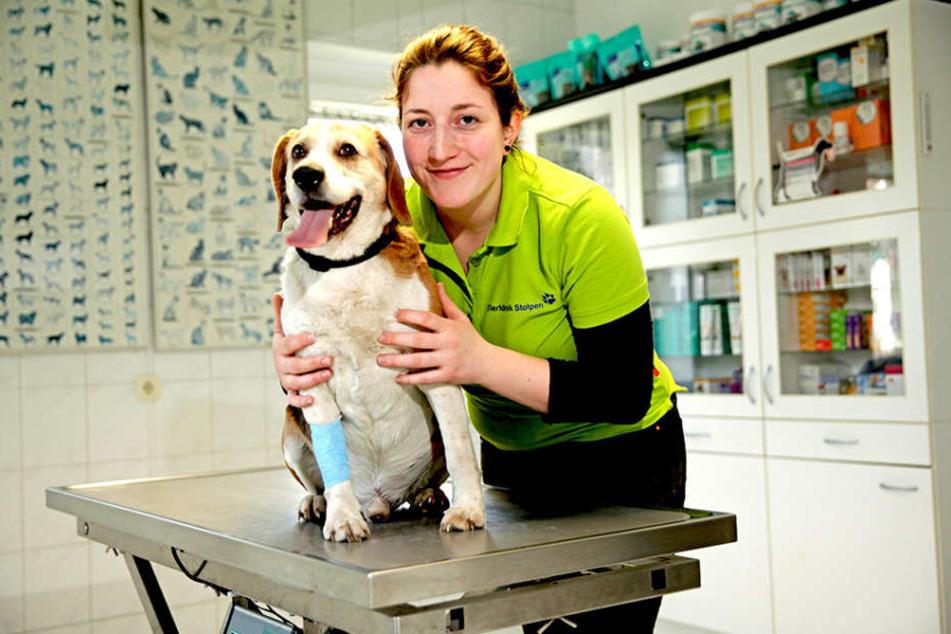 """Mandy Kübler (20) von der Tierklinik Stolpen kümmert sich um Beagle-Rüde """"Prinz"""" (11), der sein Herrchen in den Flammen verloren hat."""