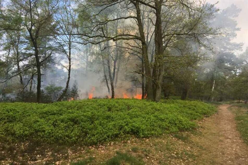 Mehrere Anrufer hatten am Freitag gemeldet, dass die Heide brennt.