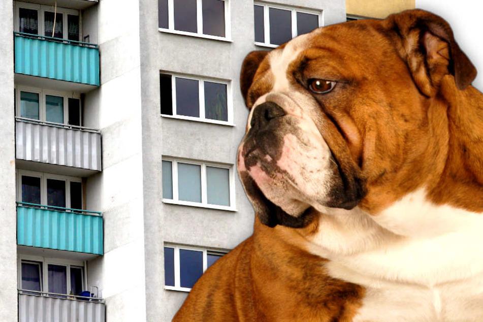 Hund stirbt bei SEK-Einsatz in Berlin