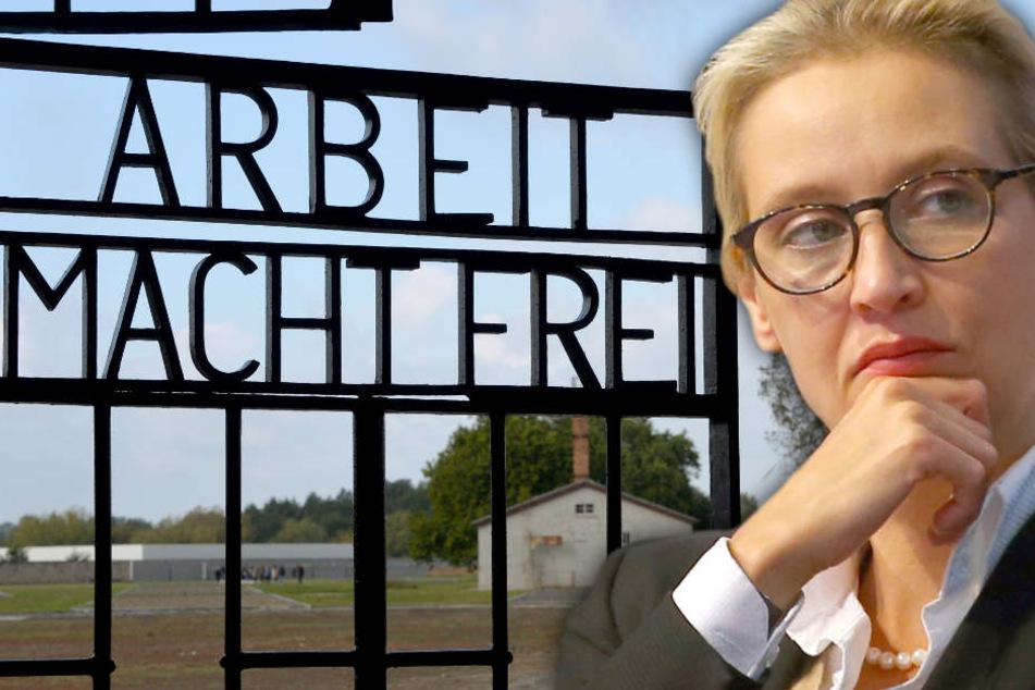 """Der Sprecher von Alice Weidel gab sich überrascht: """"Das Presseamt hätte uns informieren müssen. Da gab es aber gar nichts"""". (Bildmontage)"""