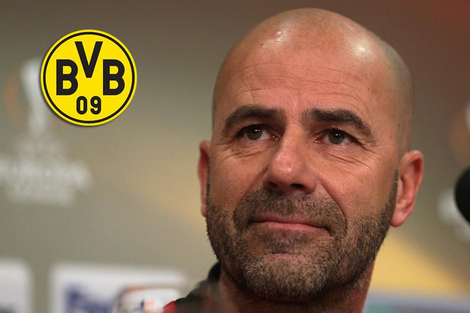 Vertrag bis 2019! Peter Bosz ist neuer Trainer von Borussia Dortmund