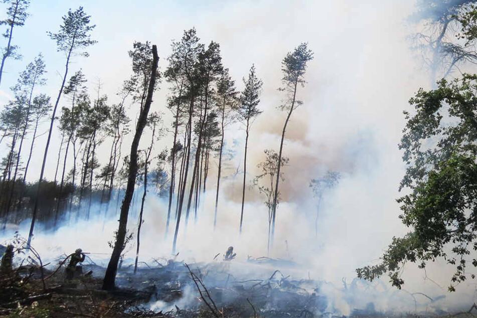 Der Mann brannte ein etwa zwei Hektar großes Waldstück nieder.
