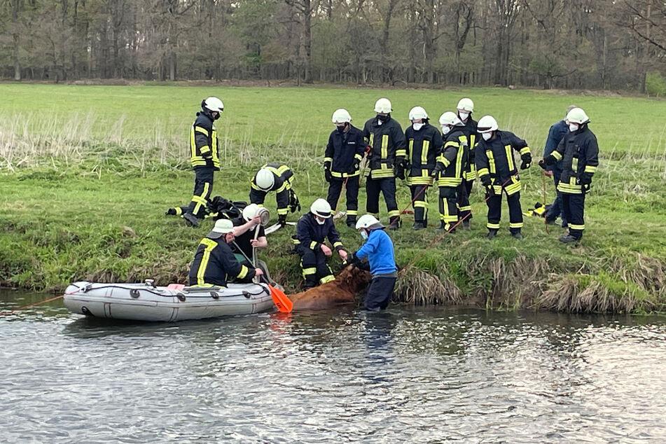 Während das Muttertier aus dem Fluss befreit werden konnte, ertrank das Jungtier leider im Wasser.