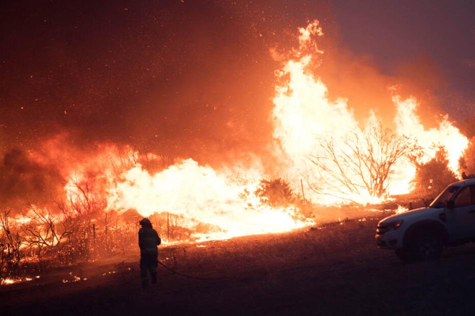 Ein Feuerwehrmann steht während der Löscharbeiten in Australien neben den Flammen.