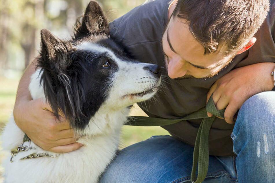 Wer seinen Hund nicht rechtzeitig meldet, könnte mit einem Bußgeld belegt werden.