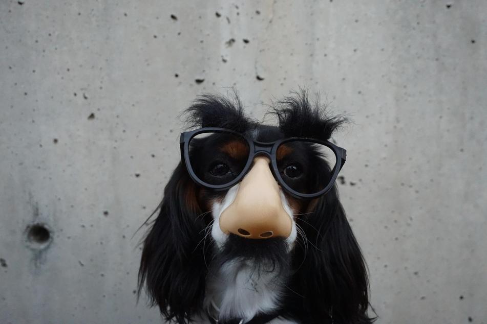 Nanu, schon vorbei? Zum Glück versorgt uns die Wissenschaft auch zukünftig mit neuen spannenden Erkenntnissen über Hunde.