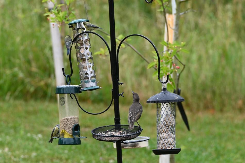 Bei einem vielseitigen und saisonalen Futterangebot in verschiedenen Behältnissen ist für jeden Geschmack und viele Vogelarten das Passende dabei.