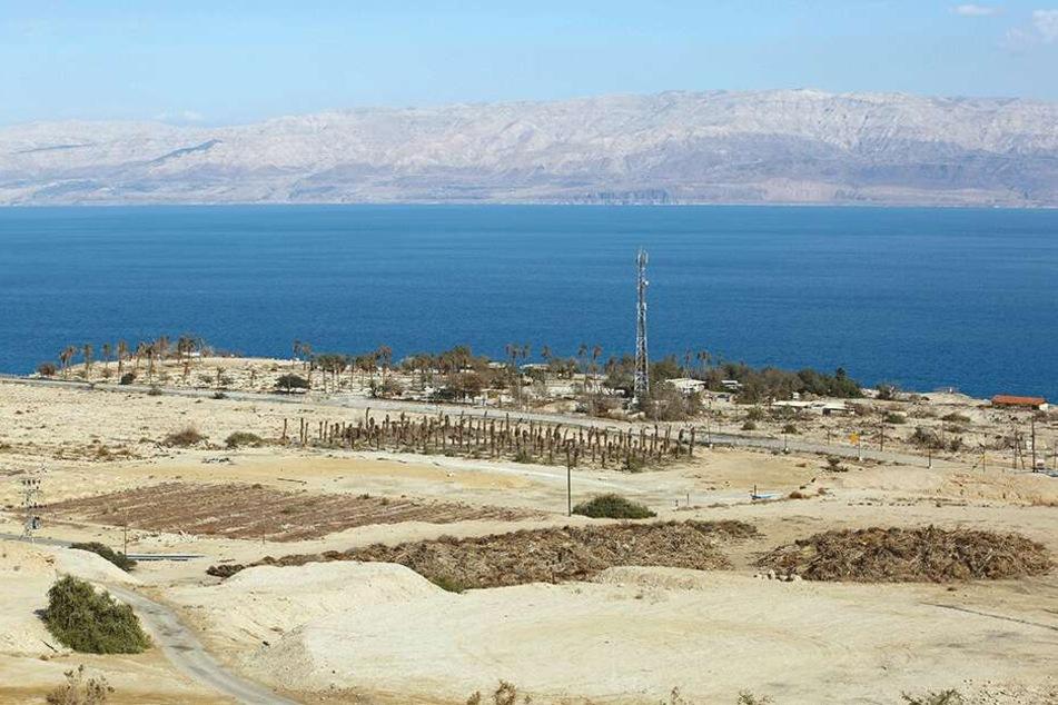 Die brütende Hitze in Israel sorgt für ausgetrocknete Dattel-Plantagen am Toten Meer.