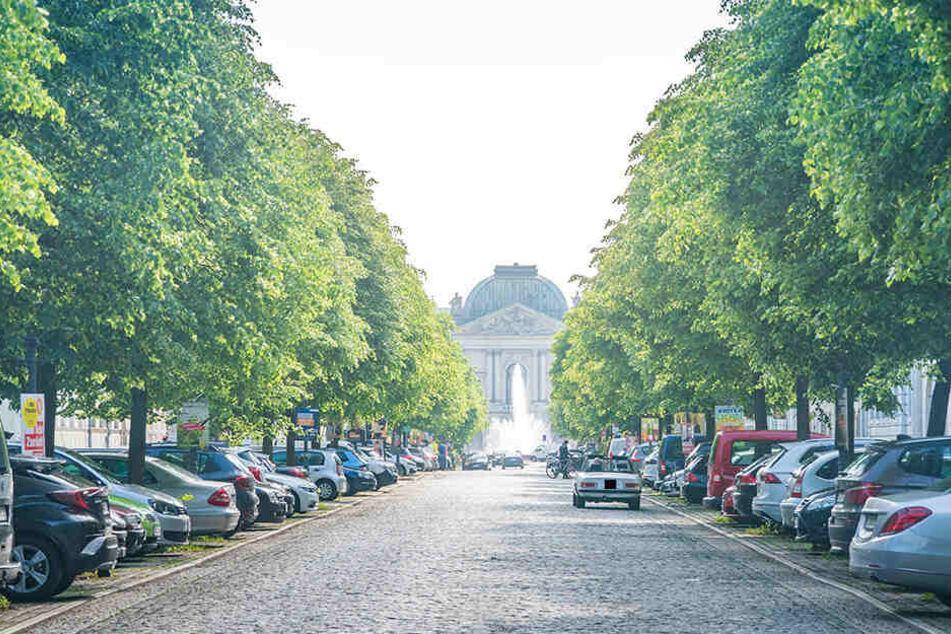 An der Königstraße in Dresden attackierten aggressive Krähen diesen Monat schon zwei Dresdner.