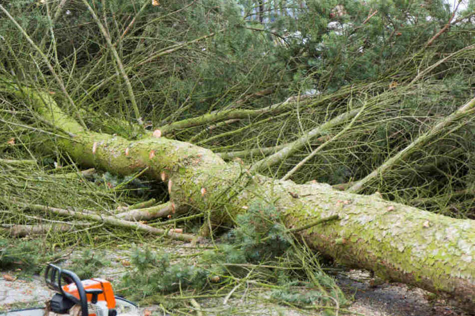 Laut den Wetterexperten können Bäume entwurzelt werden.