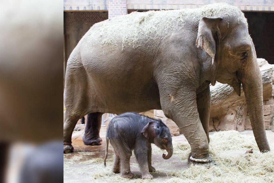 Zuckersüßer Nachwuchs im Leipziger Zoo