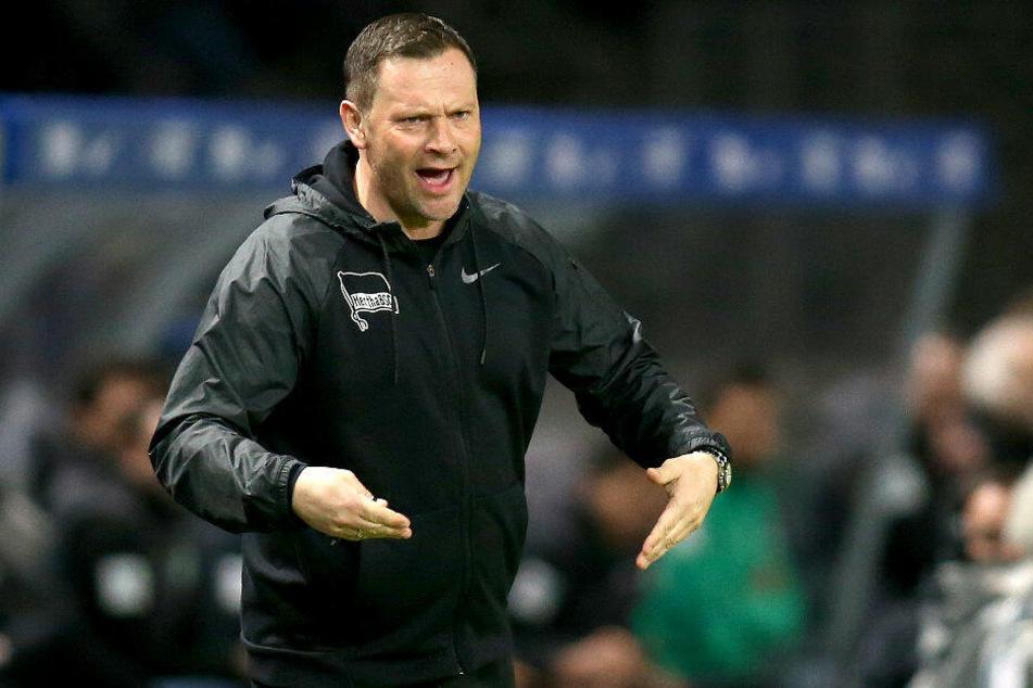 Pal Dardai kämpft mit Hertha in Freiburg gegen eine schwarze Serie.
