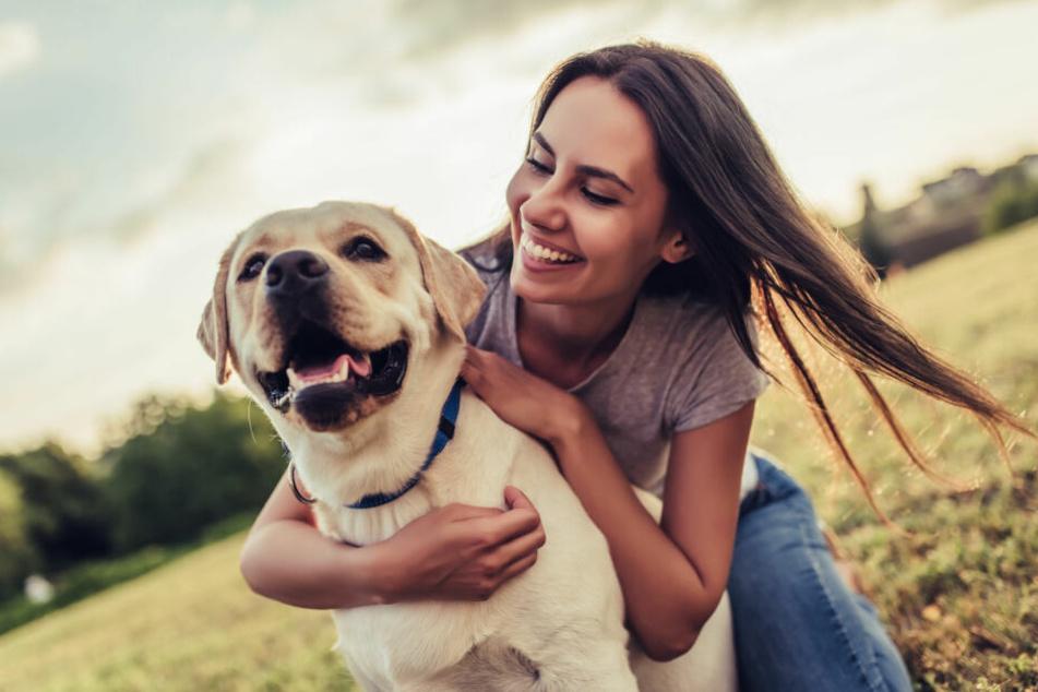 Hunde Periode Wie Lange