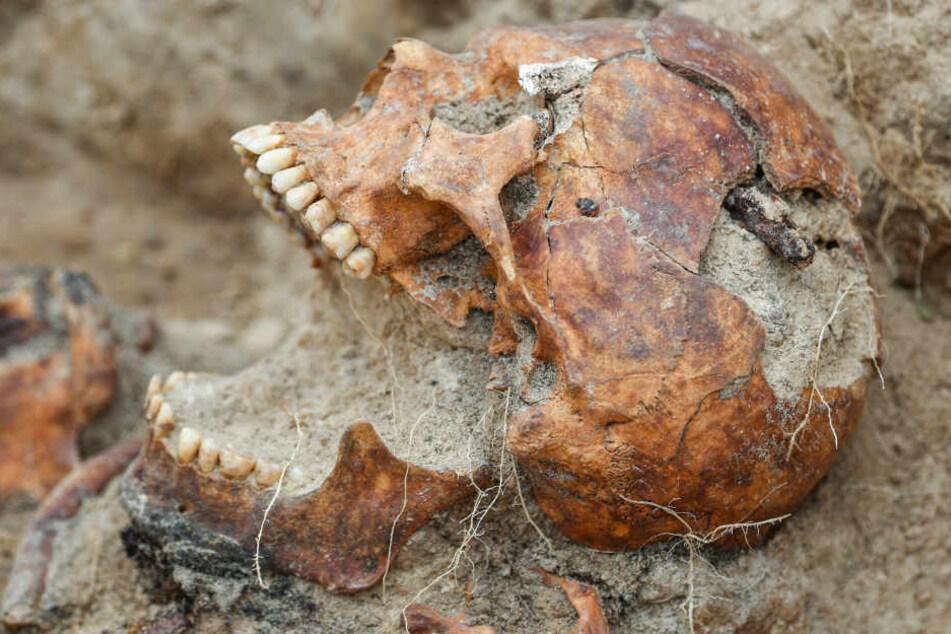 Menschliche Knochen stammen von 18-jähriger Person