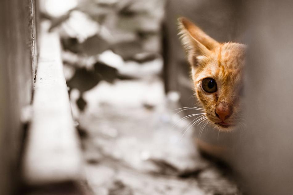 500 Tiere tot! Dieses Land setzt Kopfgeld auf einen Katzenkiller aus