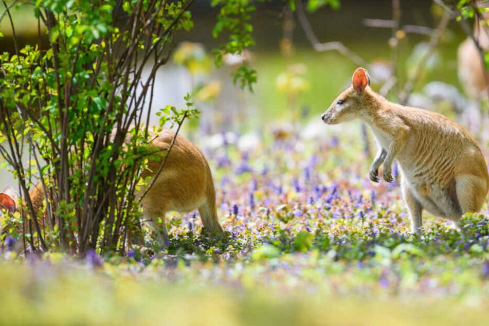 München: So hilft der Münchner Zoo verletzten und bedrohten Tieren in Australien