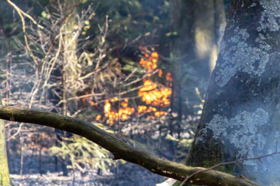 Rund 1000 Quadratmeter brannten auf dem Feldbergplateau.