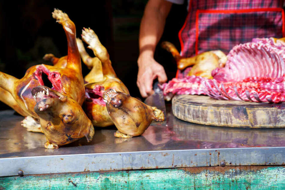 In Vietnam landen Hunden auf offener Straße auf dem Grill (Symbolbild).