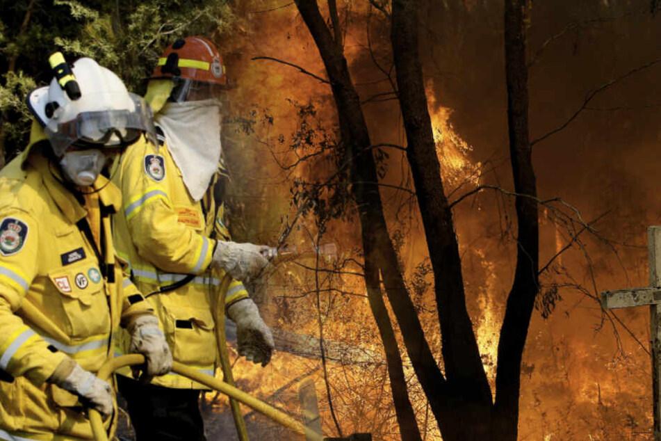 Buschfeuer wüten weiter: Vier Tote! So sieht es im Inneren der Flammen-Hölle aus