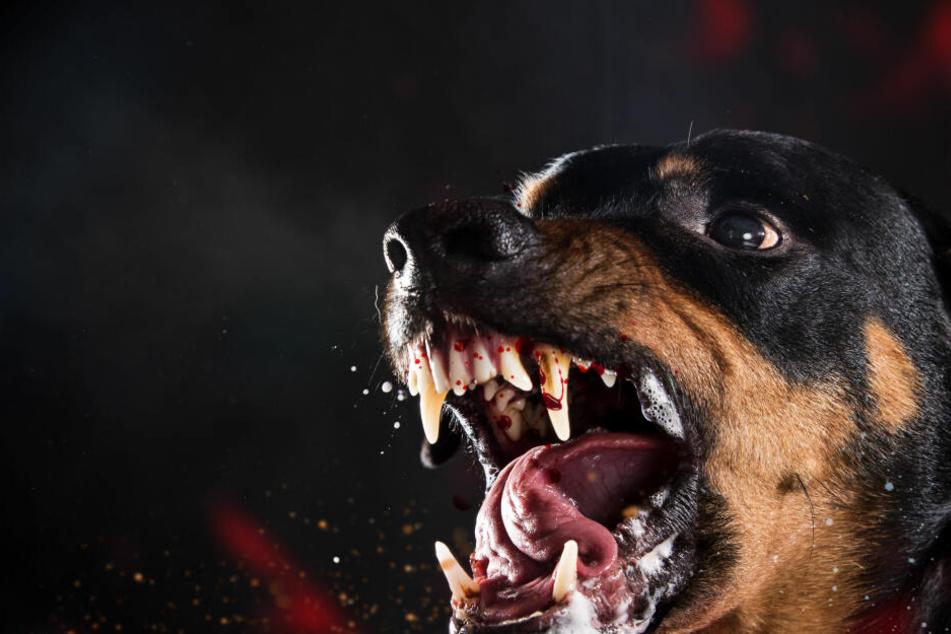 Ein Hundehalter hat in Leipzig-Eutritzsch seinen Rottweiler auf einen anderen Mann gehetzt. (Symbolbild)