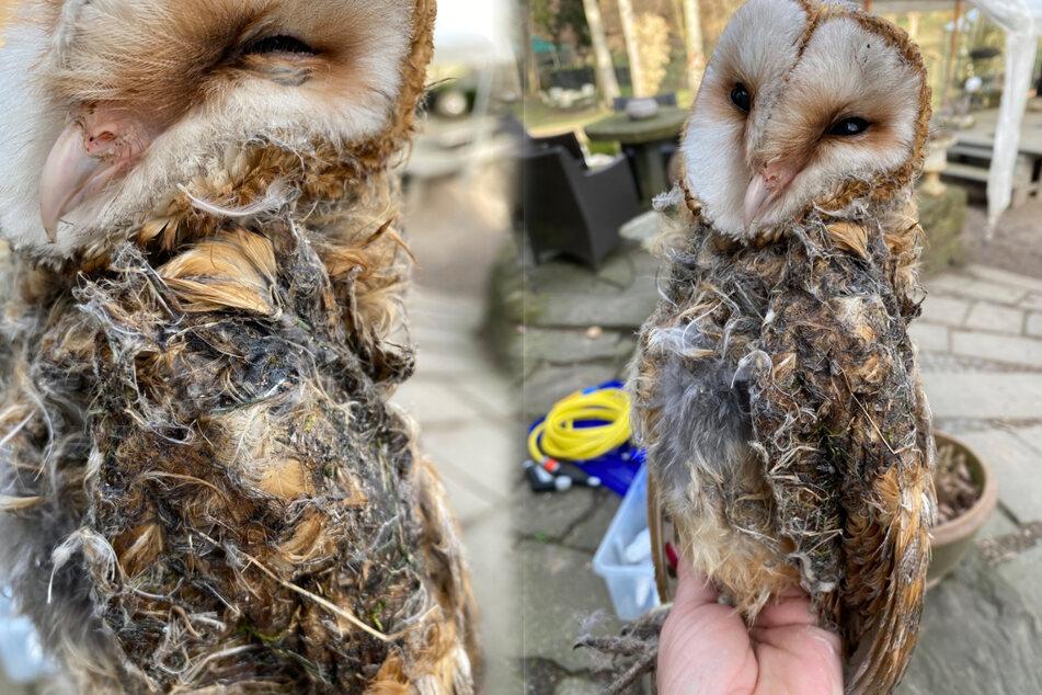 Eule ist völlig verklebt: Was ist nur mit diesem armen Vogel passiert?
