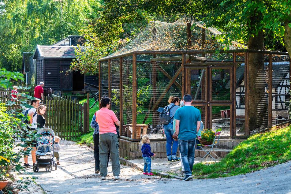 Besucher kommen aus ganz Deutschland, um das Sammelsurium der kleinen Arten im Zoo der Minis zu sehen.