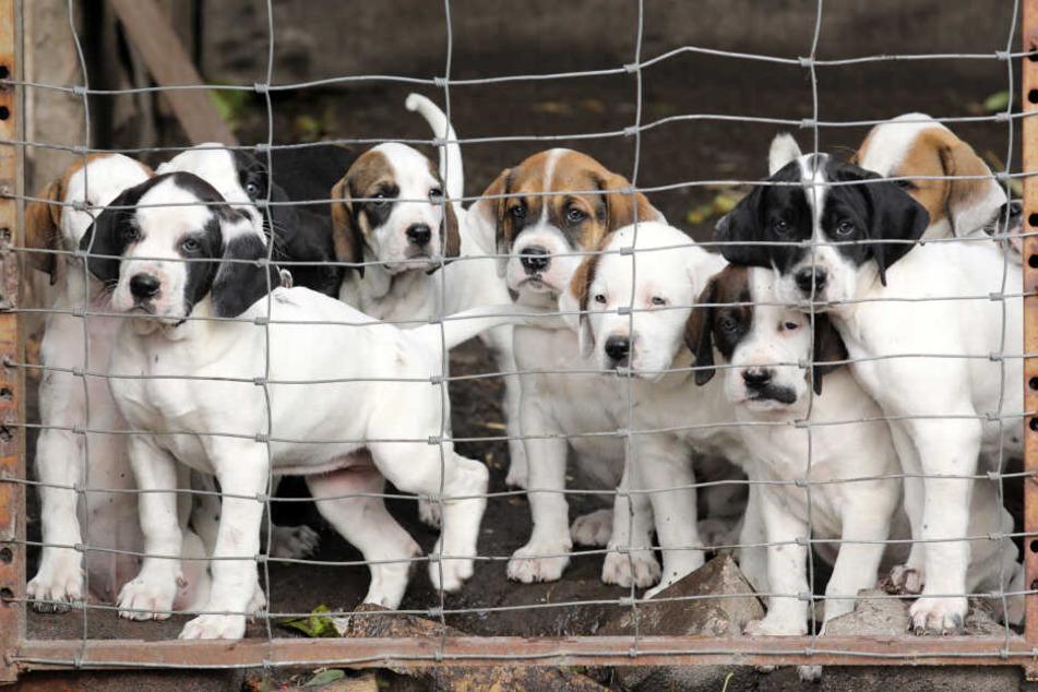 Tierschützer retten Hündin, plötzlich wirft sie zwölf Kinder