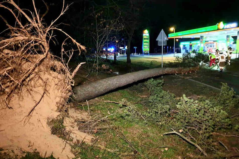 Brandenburg, Schönwalde: Ein umgestürzter Baum liegt am Straßenrand.
