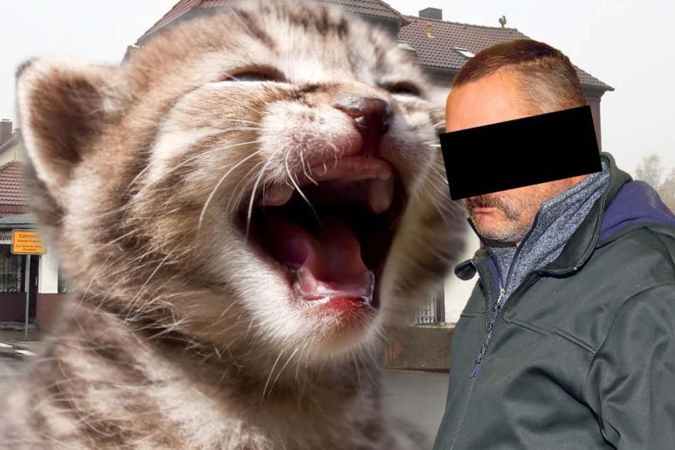 Er ließ zwei Miezen grausam verhungern: Richterin jagt Katzen-Killer!