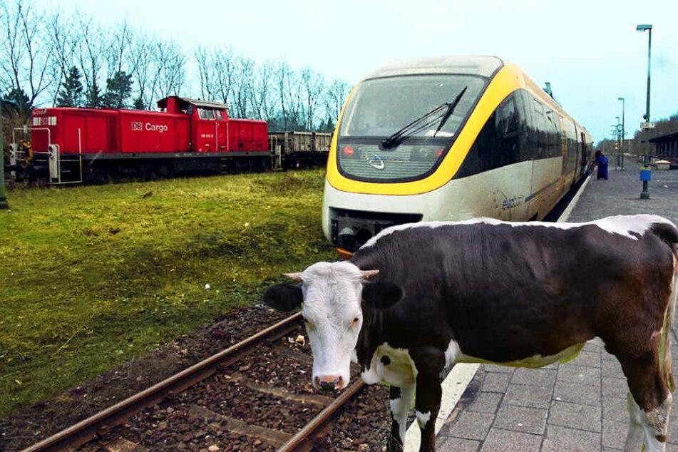 18 Tiere versperrten den Weg für die Züge.