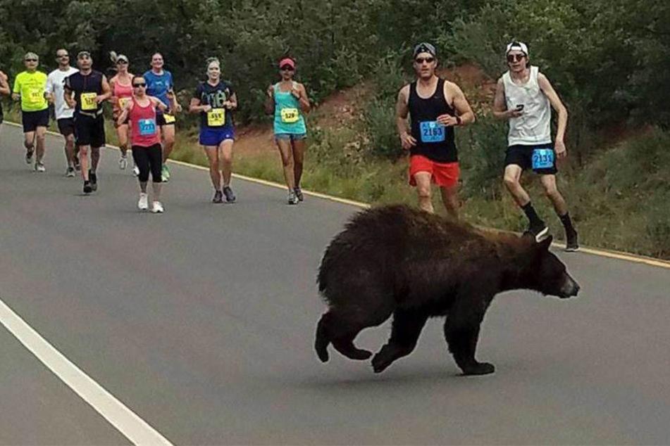 Als die Läufer eine Lücke anbieten, nutzt ein Bär die Gunst der Stunde