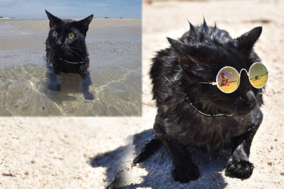 Wasserscheu? Von wegen! Diese Katze liebt, es im Meer zu schwimmen!